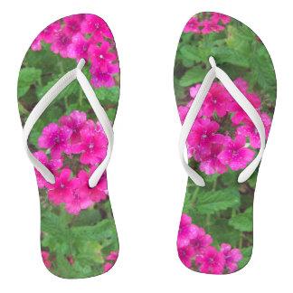 Chinelos O verbena cor-de-rosa bonito floresce a foto