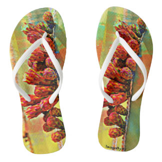 Chinelos unisex - flor do cacto na pintura
