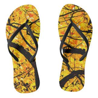 Chinelos Veias douradas do outono