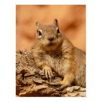 Chipmunk engraçado que encontra-se em uma rocha cartão postal