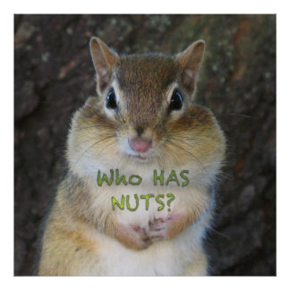 Chipmunk - quem tem os loucos pôsteres