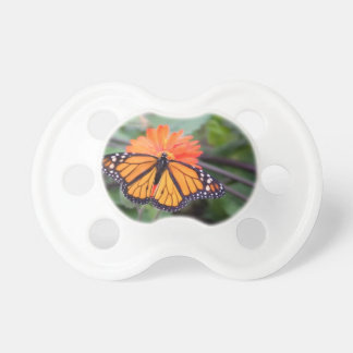 Chupeta Borboleta de monarca na flor alaranjada