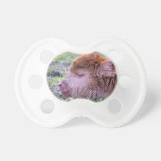 Chupeta Cabeça da vitela escocesa recém-nascida marrom do