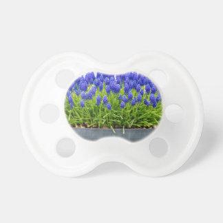 Chupeta Caixa cinzenta da flor do metal com os jacintos de