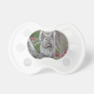 Chupeta Comer do esquilo