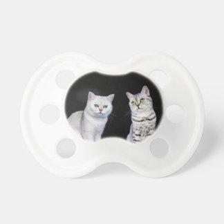 Chupeta Dois gatos britânicos do cabelo curto no fundo