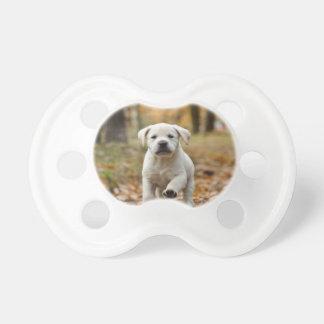 Chupeta Filhote de cachorro de labrador retriever