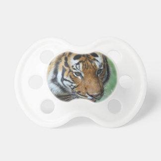 Chupeta Fim-acima do tigre do Malay dos alugueres