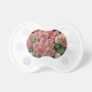 Chupeta Flores de um hydrangea do francês (macrophyl do