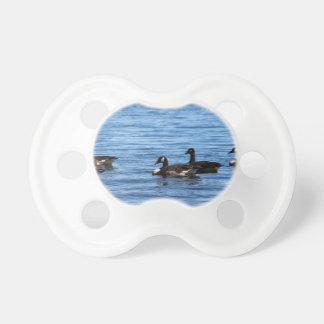 Chupeta Gansos no lago