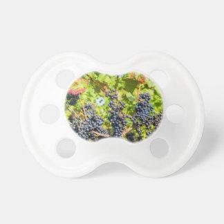 Chupeta Grupos azuis de suspensão da uva no vinhedo