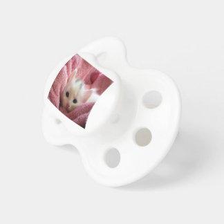 Chupeta kitten-cat-fluffy-cat-cute-62321