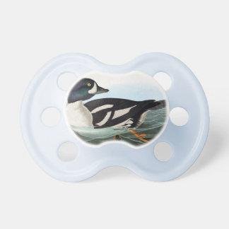 Chupeta O pato selvagem branco e preto ducks a natação na