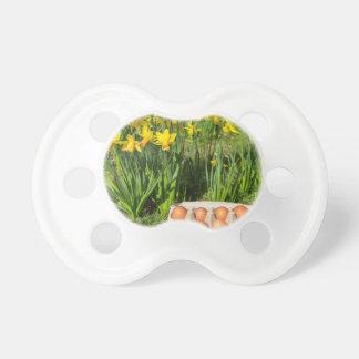 Chupeta Ovos na caixa na grama com daffodils amarelos
