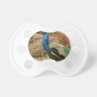 Chupeta Pavão do verde azul e da laranja