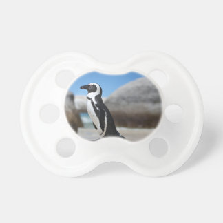 Chupeta Pinguim africano