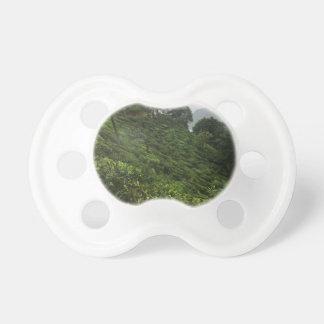 Chupeta Plantação de chá
