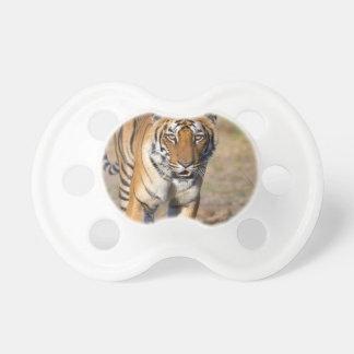 Chupeta Rapina de desengaço do Tigress fêmea