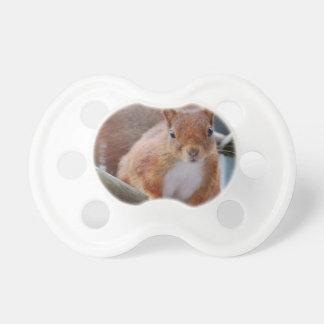 Chupeta Squirrel esquilo Écureuil - Louis Glineu