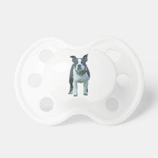 Chupeta Terrier 1b de Boston