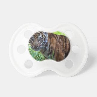 Chupeta Tigre Cub de Sumatran dos alugueres