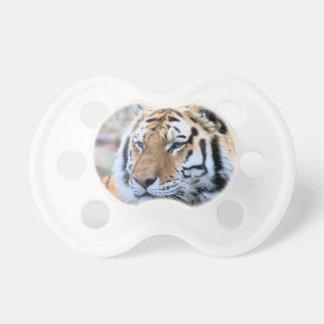 Chupeta Tigre de Bengal real estóico dos alugueres