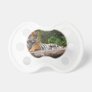 Chupeta Tigre do Malay dos alugueres que Lounging no