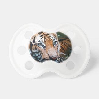 Chupeta Tigre dos alugueres na água