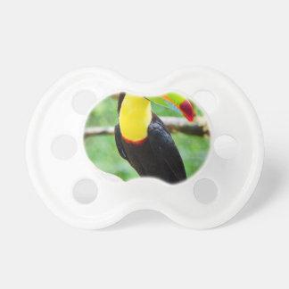 Chupeta Toucan bonito