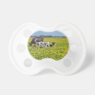 Chupeta Vaca com as vitelas que pastam no prado com