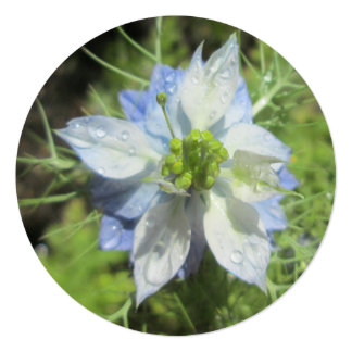 Chuva azul verde branca de Nigella Convite Quadrado 13.35 X 13.35cm