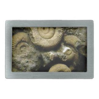 círculos de caracóis fósseis
