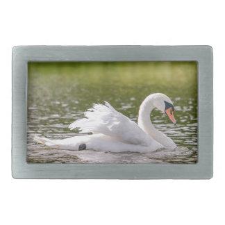 Cisne branca em um lago