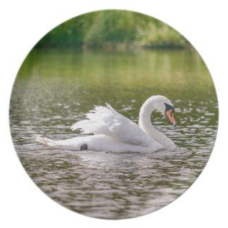 Cisne branca em um lago prato