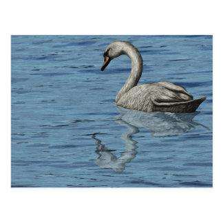 Cisne em um cartão do lago