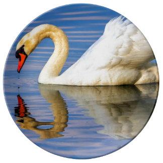 Cisne muda, olor do cygnus pratos de porcelana