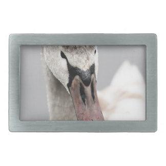 Cisne orgulhosa ser um pássaro de água Nature.jp
