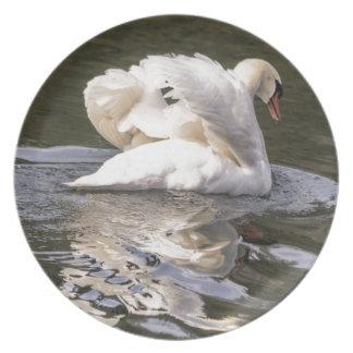 Cisne tímida louças de jantar