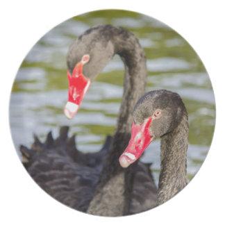 Cisnes pretas do casal pratos de festas