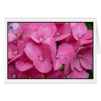 Close up cor-de-rosa do Hydrangea Cartão Comemorativo