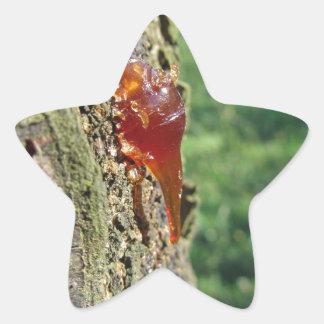 Close up da excreção da árvore de pera da resina adesivo estrela