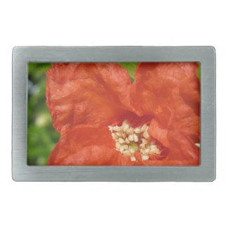 Close up da flor vermelha da romã
