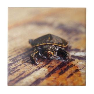 Close up de uma tartaruga pintada bebê
