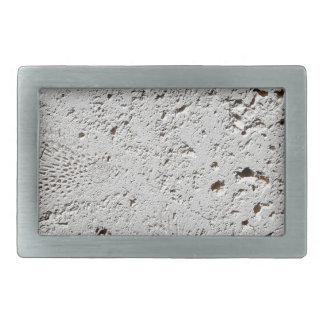 Close up fóssil da superfície do azulejo da