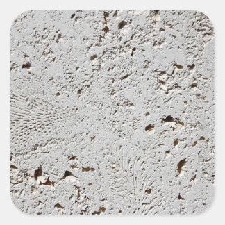 Close up fóssil da superfície do azulejo da adesivo quadrado