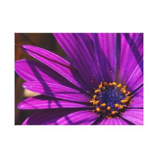 Close up magenta da flor impressão de canvas envolvidas