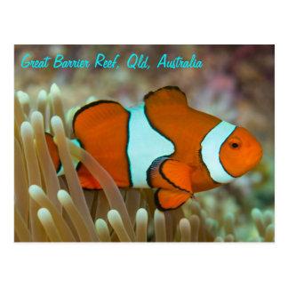 Clownfish no grande cartão do recife de coral