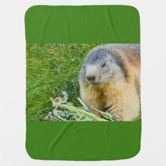Cobertor De Bebe fim-acima de uma marmota sociável na cobertura do