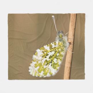 Cobertor De Velo borboleta da Alaranjado-ponta