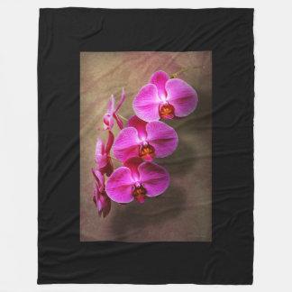 Cobertor De Velo Orquídea - Phalaenopsis - a orquídea de traça